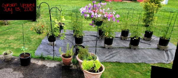 wpid-Garden20100713-2010-08-12-13-36.jpg
