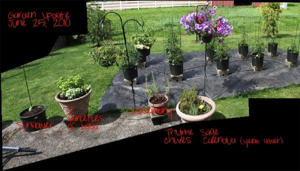 wpid-GardenUpdate-20100625-2010-08-12-13-36.jpg