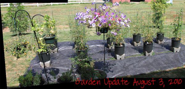 wpid-GardenUpdate-20100803-2010-08-12-13-36.jpg