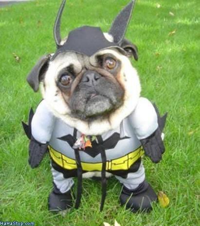 wpid-Bat_Dog-2011-04-27-00-01.jpg