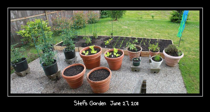 wpid-StefsGarden2011-0627-2011-07-1-00-01.jpg