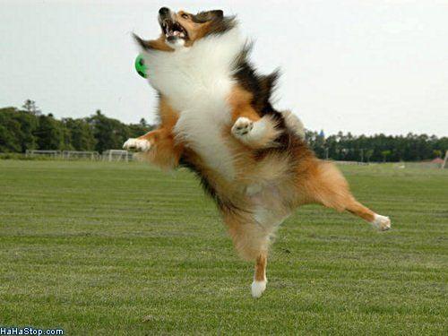 wpid-Attack_Dog-2011-08-10-08-00.jpg