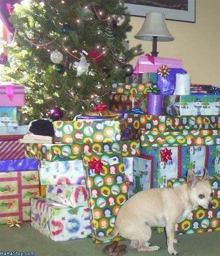 wpid-Christmas_Present-2011-12-7-08-57.jpg