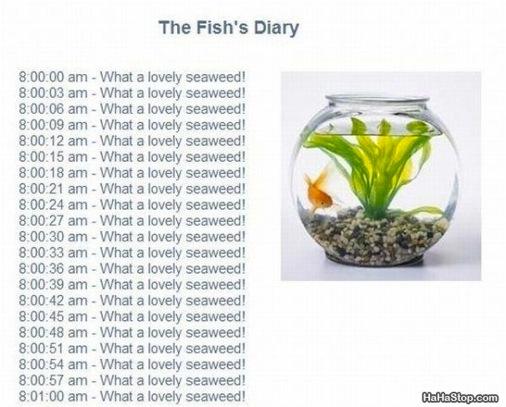 wpid-The_Fish_Diary-2012-01-6-09-30.jpg