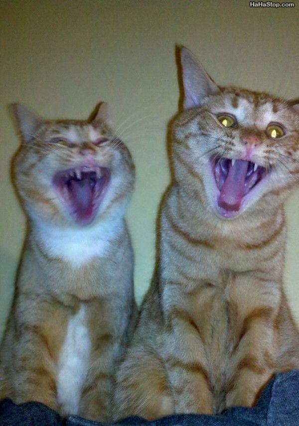 wpid-Cats_Loling-2012-03-14-07-22.jpg